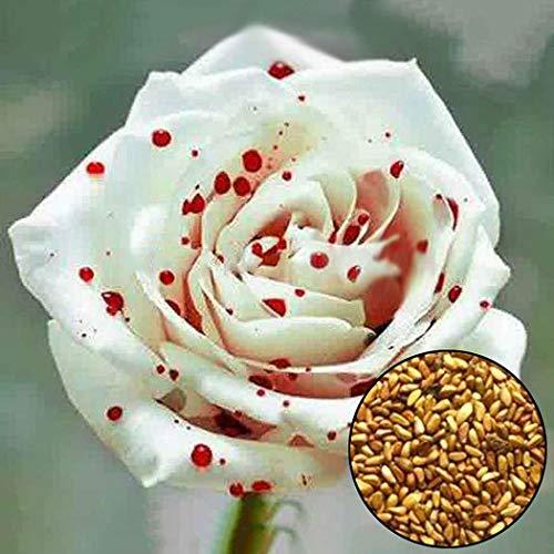 begorey Garten - Blutige Romantische Rose Samen 100 Stk. Blumensamen Garten Blume Pflanze Blumensamen