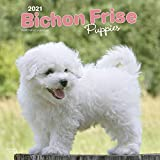 Bichon Frisé Puppies - Gelockter Bichon Welpen 2021 - 18-Mon