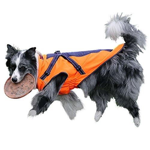 GWELL Hund Hundejacke Wasserdicht Fleece gefüttert Regenjacke Winterjacke Funktion Weste mit D-Ringe Gurt für Mittelgroßen Großen Hund Winter Herbst Orange&Schwarz XS