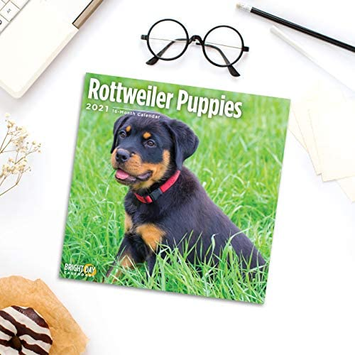 2021 Rottweiler Puppies Wall Calendar by Bright Day 12 x 12 Inch Cute Dog product image