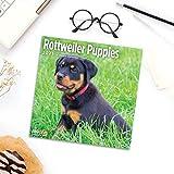 2021 Rottweiler Puppies Wall Calendar by Bright Day, 12 x 12 Inch, Cute Dog