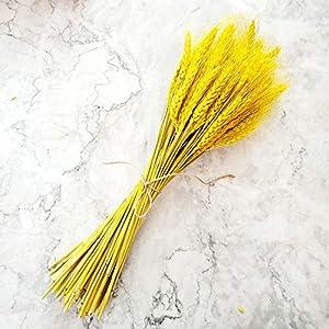 Poleas de trigo secas naturales 100 tallos para arreglos de otoño DIY decoración del hogar (blanco)
