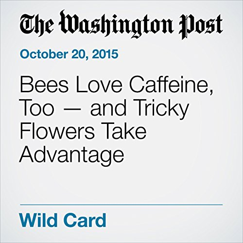 Bees Love Caffeine, Too — and Tricky Flowers Take Advantage audiobook cover art