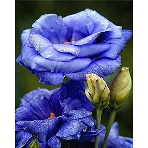 Ifoto Diy 5D Diamante Pintura Por Número Kit Rhinestone Bordado De Punto De Cruz Artes Manualidades Lienzo Pared Decoración(30X40Cm)-Flor De Rocío Azul