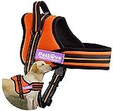 PetLove Dog Harness, Soft Leash Padded No Pull Dog Harness with All Kinds of Size (Medium, Orange)