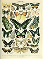 昆虫の蝶-大人のためのパズル十代の若者たち1000ピースジグソーパズル大人のためのジグソーパズルセット、知的絵画パズルゲームおもちゃ家の壁の装飾のためのギフト75X50Cm