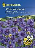 Wilde Kornblume