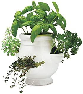 Wind & Weather Ready-to-Grow Indoor Herb Garden Starter Kit - white ceramic strawberry-style pot, soil, herb seeds for sweet basil, coriander/cilantro, oregano, parsley extra triple curled and thyme