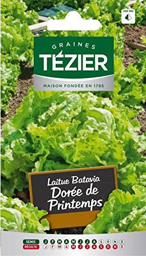 bolsa de semillas Lechuga Batavia de Primavera Dorada (B.G.) Tezier