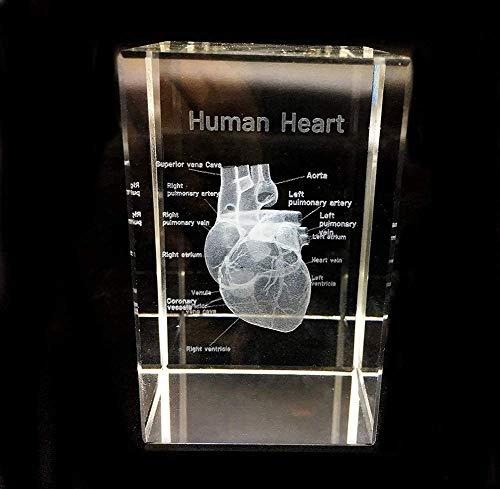 SBDLXY 3D-Briefbeschwerer-Würfel (der lasergravierte Würfel) im Anatomischen Geschenk-Doktor des menschlichen Herzmodells Crystal Crystal 5 * 5 * 8 cm, 8 * 8 * 15 cm