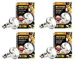 Exo Terra Sun-Glo Basking Infrared Spot Lamp, 100-Watt/120-Volt (4 Pack)