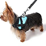 Alfie Pet by Petoga Couture - Justice Harness Vest and Leash Set - Color: Red, Size: Small