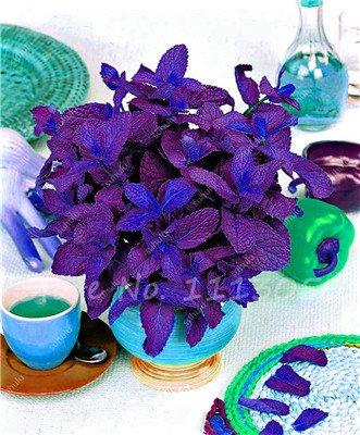 Heirloom menthe graine coloré Flowerpot Menthe poivrée bio Sementes Semillas Mini Jardim le Germination Taux 95% 100 Pc 6