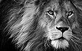Puzzle per adulti Puzzle Lion Predator Black And White Dangerous Mane Puzzle da collezione di alta qualità-1000 pezzi