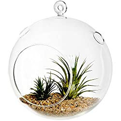 "7"" Large Clear Glass Hanging Air Plant Terrarium"