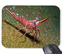 赤いエビのマウスパッド