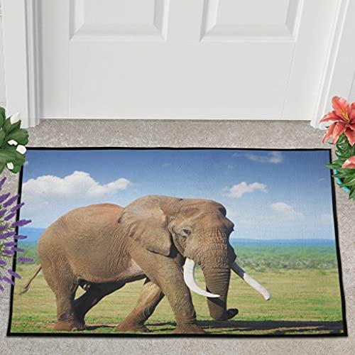Veryday Felpudo, diseño de elefante, cielo, nube, felpudo para la entrada, felpudo para la puerta del salón, color blanco, 50 x 80 cm