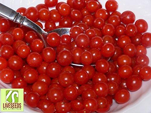 Leinsamen - Tomaten Tomaten Tomaten Tommy rote Tomaten in der Welt - 10 feinste Samen