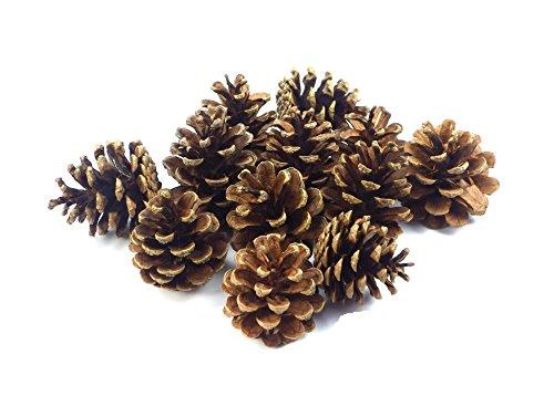 Sepkina 12 Tannenzapfen ca. 5-6cm Schwarzkiefern Zapfen Kiefernzapfen Tanne Naturzapfen Weihnachtsdeko Adventsdeko Herbstdeko