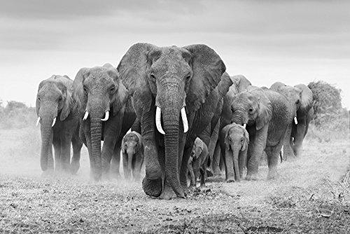 Elephant Herd (9x12 Art Print, Wall Decor Travel Poster)