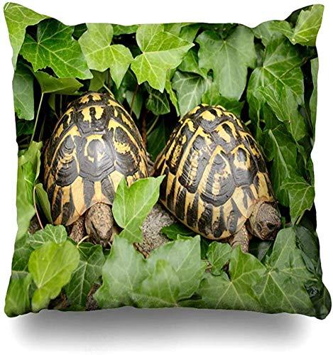 Throw Pillow Cover Bush Green Garden Dos tortugas terrestres Hidden Ivy Grass Mediterráneo Diseño griego Funda de almohada para el hogar Funda de almohada decorativa con cremallera cuad 18×18pulgada