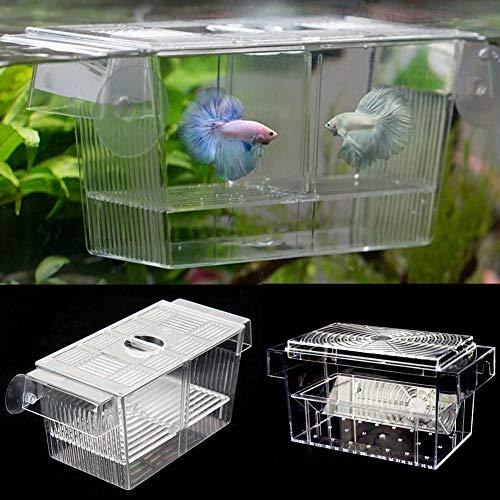 Hinmay Fischzuchtbox, Acryl-Fisch-Isolationsbox mit Saugnäpfen, Aquarium-Beschluss Brutkasten für Babyfische Garnelen Clownfisch und Guppy