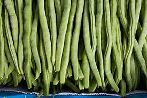 Bean Mix Garden Collection des semences, Heirloom, graines biologiques, Top 5 des variétés