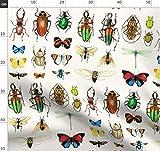 Käfer, Schmetterlinge, Entomologie, Weiß Stoffe -
