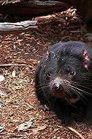 Tasmanian Devil Sarcophilus Harrisii Tasmania Australia Lined Journal