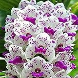 Granos de fleur50Pcs/Sac Phalaenopsis Semillas Orquídeas Ajardinar Adornos Colores Mixtos Siembra...