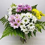 MARGARITAS VARIADAS. Ramos de flores naturales a domicilio en 24h