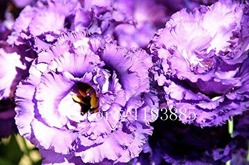 100pcs / paquet violet Graines de Lisianthus rares semences graines de eustoma Graines de fleurs Bonsai pour Maison & Jardin