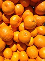 和歌山県産 はるみみかん (S~M サイズ)5キロ ポンカンと清美の交配種
