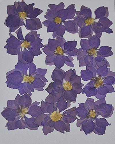 handi-kafu Purple Larkspur vera premuto fiori secchi