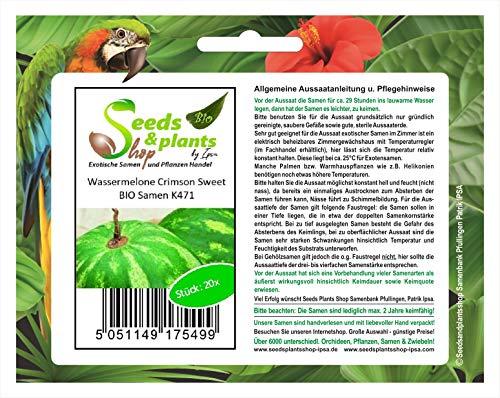 20 x Pastèque Bio Cramoisi - Graines de Légumes Ecologiques K471