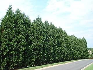 Best cypress trees online Reviews