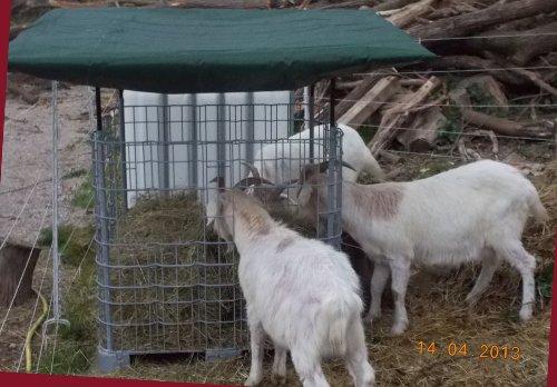 Hofer24 Ziegen - Heuraufe/Futterraufe für Schafe mit Dachrahmen und GRATIS-Plane - OHNE Ausschnitt