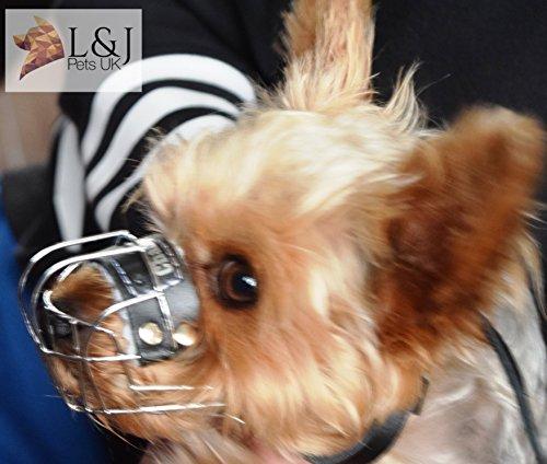 Champion Maulkorb für Hunde, Metall, robust, für Rattler Yorkshire Terrier und andere
