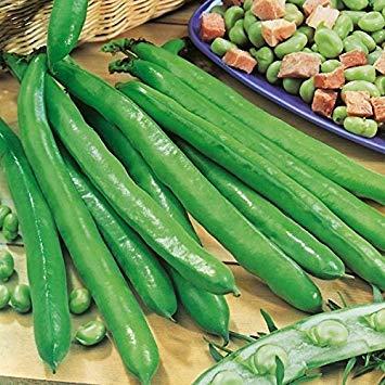 Shop Meeko King Seeds - Bohnen - Saubohne Bunyards Ausstellung - 1 kg Samen