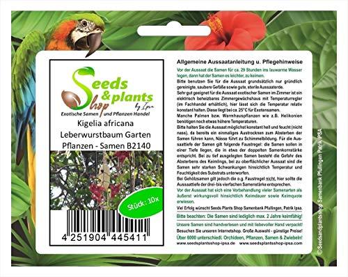 Stk - 10x Kigelia africana Leberwurstbaum Garten Pflanzen - Samen B2140 - Seeds Plants Shop Samenbank Pfullingen Patrik Ipsa