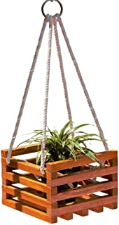 GreenLife Conceptz - Wooden cage Indoor plant hanger with Live Spider plant (Chlorophytum)