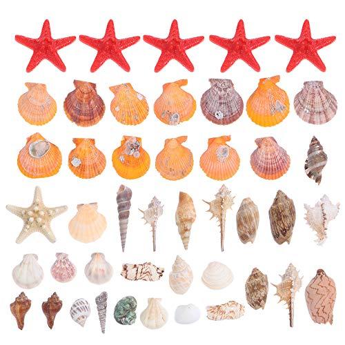ABOOFAN 1 Unidades de conchas naturales Caracoles de mar DIY Fish Tank Microlandscape Shell Crafts