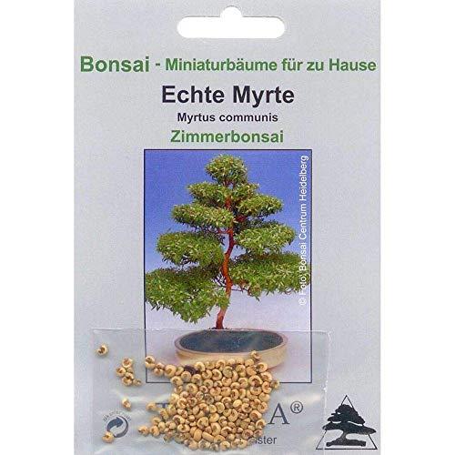 Bonsaï - 30 Graines De Myrtus Communis, Réel Myrte Blanc, 90028