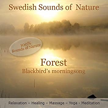 Swedish Sounds of Nature - Forest