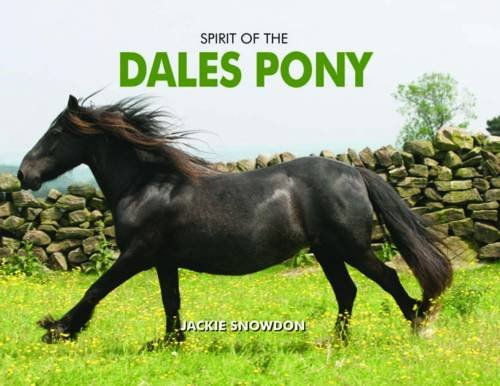 Spirit of the Dales Pony