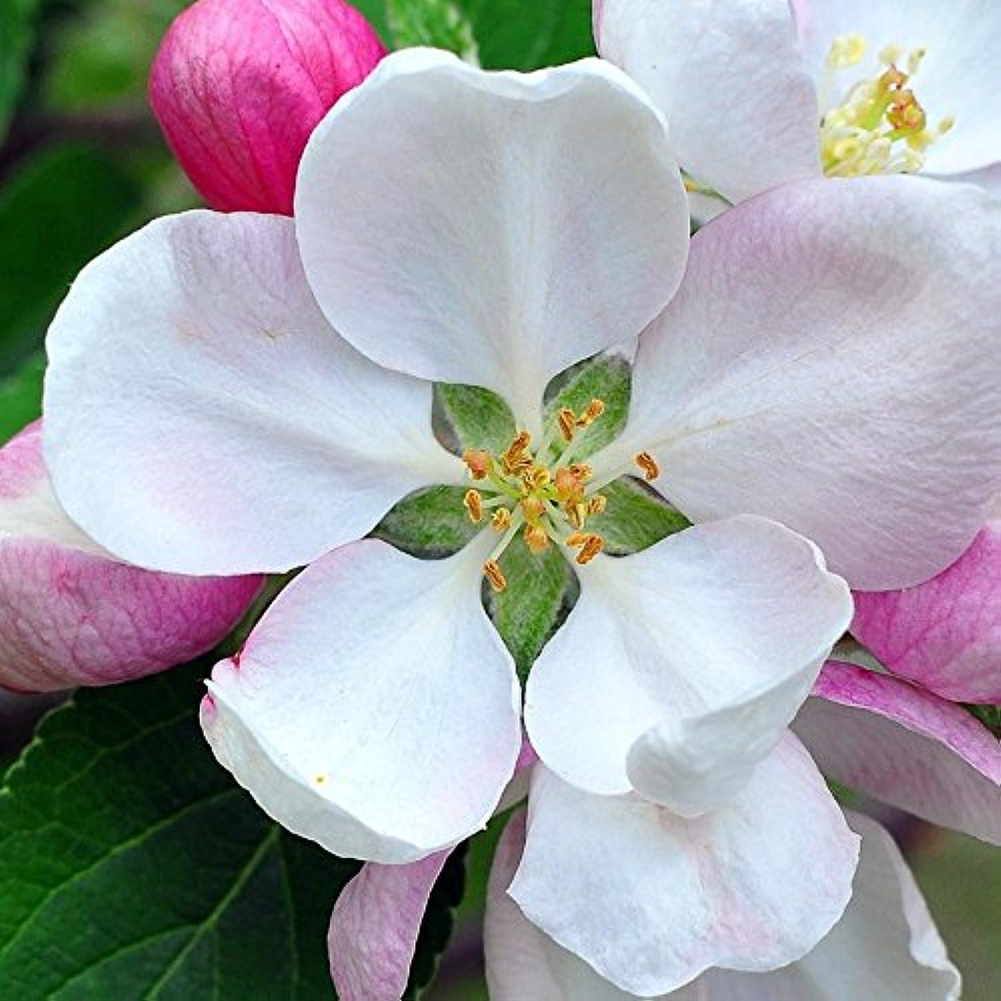 船尾ビザプレゼンターアロマフレグランスオイル 日本モクレン(Japanese Magnolia)