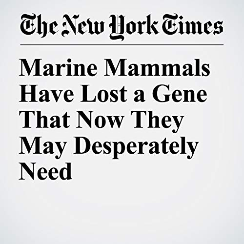 Marine Mammals Have Lost a Gene That Now They May Desperately Need copertina