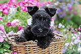 Kreuzstich Stickpackung,Black Scottish Terrier Hund Blumen11CT Stickbild Stickvorlage Vorgedruckt...