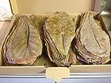 Catappa-Leaves XL - Hojas de almendro indio (100 unidades, aprox. 20 cm), producto original de la marca A de Catappa-Leaves