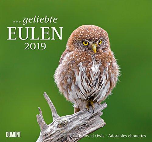 Geliebte Eulen - Kalender 2019 - DuMont-Verlag - Wandkalender mit Zauberhaften Aufnahmen - 38 cm x 35,5 cm